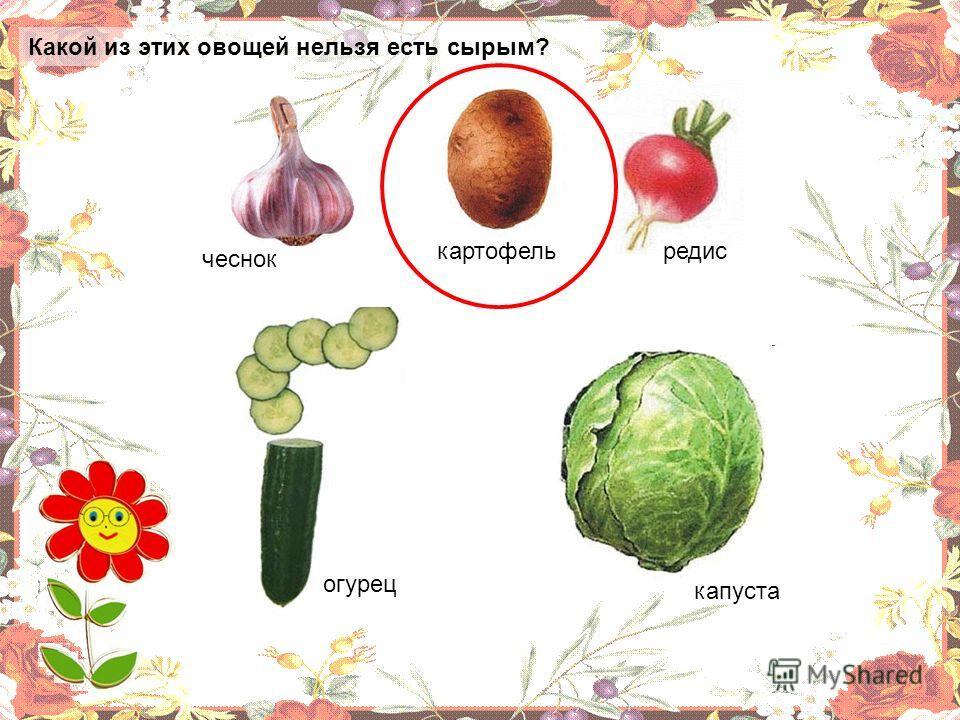 Какой из этих овощей нельзя есть сырым?. огурец капуста чеснок картофельредис