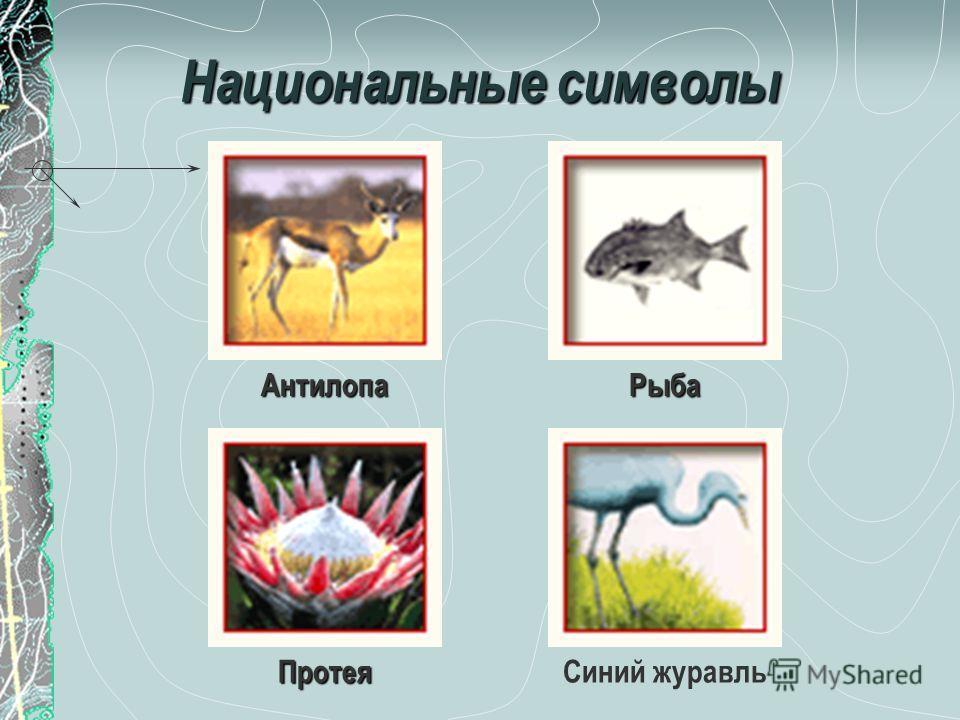 Национальные символы АнтилопаРыба ПротеяСиний журавль