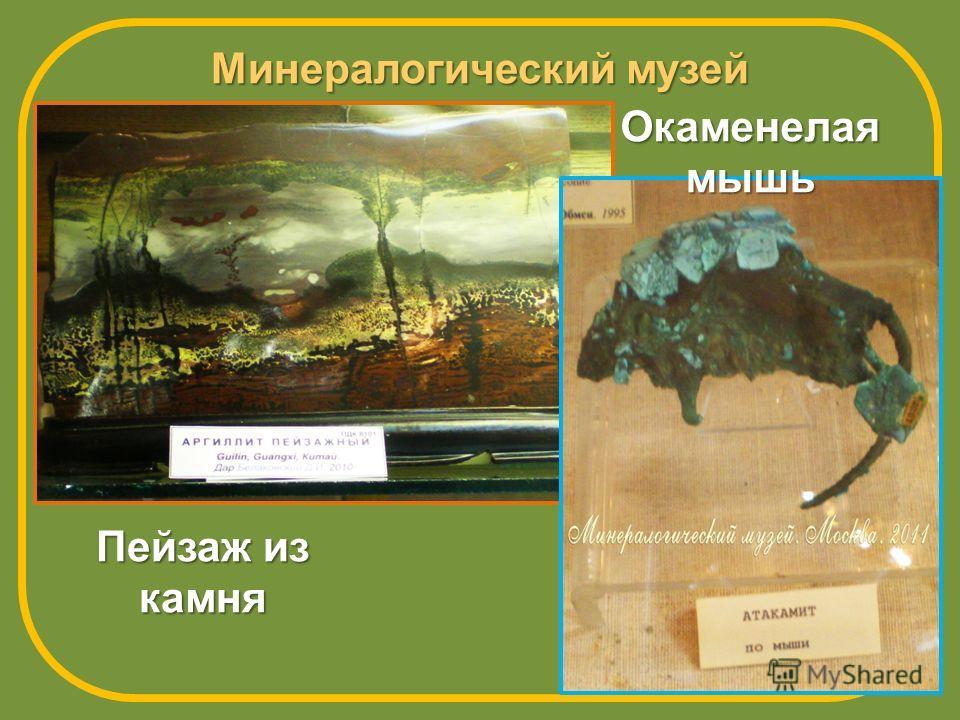 Минералогический музей Пейзаж из камня Окаменелая мышь
