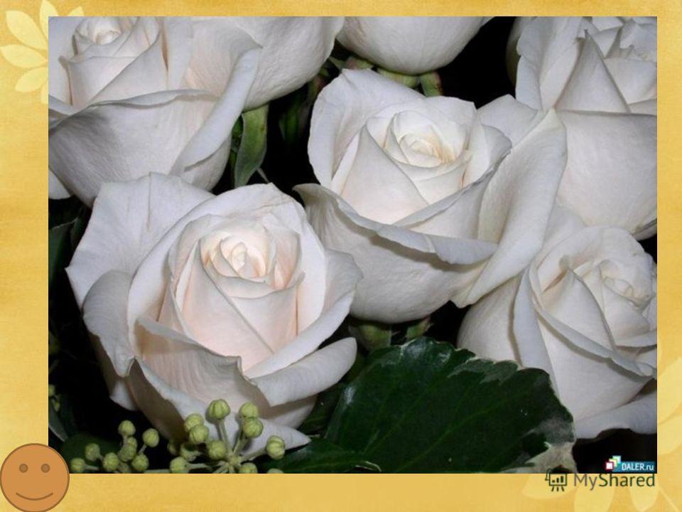 Самые первые сведения о ней встречаются в древнеиндийских сказаниях, хотя родиной считается Персия. С древних времен и по сей день это растение остается непревзойденной царицей цветов, символом красоты и величия. По преданию, Лакшми, самая красивая ж