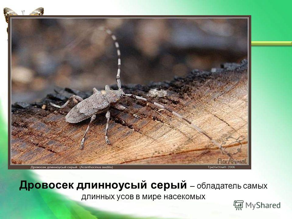 Блоха – самый лучший в мире прыгун среди насекомых Длина ее тела – 1,5 мм, а прыгает она на расстояние в 33 см. Это в 220 раз больше ее длины.