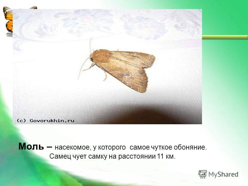 жуки паразиты человека