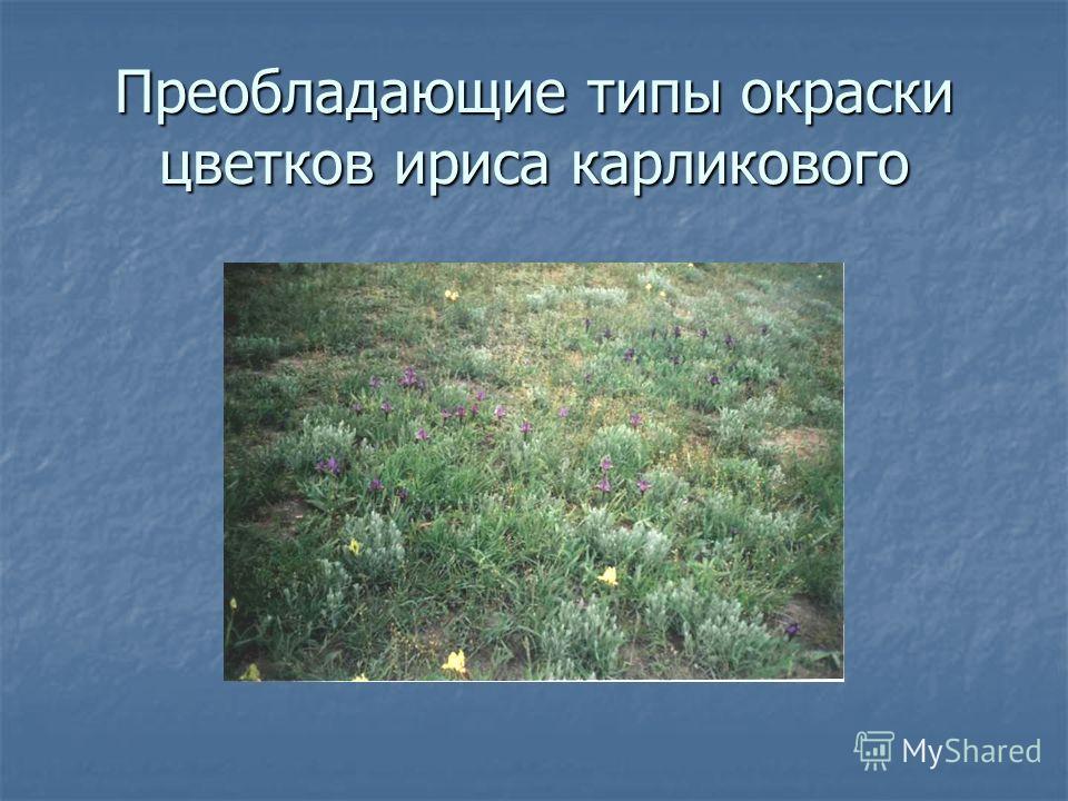 Преобладающие типы окраски цветков ириса карликового