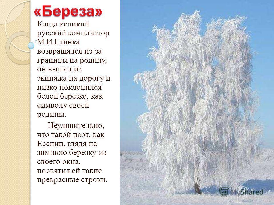 Когда великий русский композитор М.И.Глинка возвращался из-за границы на родину, он вышел из экипажа на дорогу и низко поклонился белой березке, как символу своей родины. Неудивительно, что такой поэт, как Есенин, глядя на зимнюю березку из своего ок