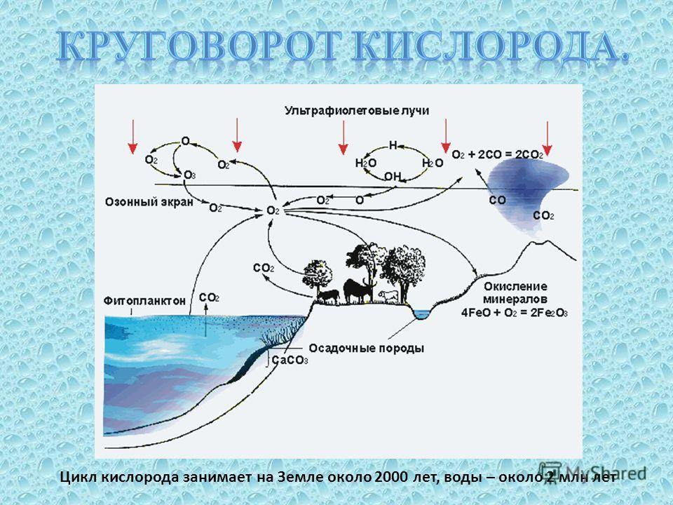 Цикл кислорода занимает на Земле около 2000 лет, воды – около 2 млн лет