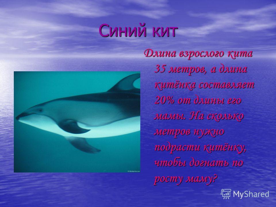 Синий кит Длина взрослого кита 35 метров, а длина китёнка составляет 20% от длины его мамы. На сколько метров нужно подрасти китёнку, чтобы догнать по росту маму?