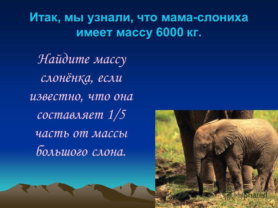 Итак, мы узнали, что мама-слониха имеет массу 6000 кг. Найдите массу слонёнка, если известно, что она составляет 1/5 часть от массы большого слона.
