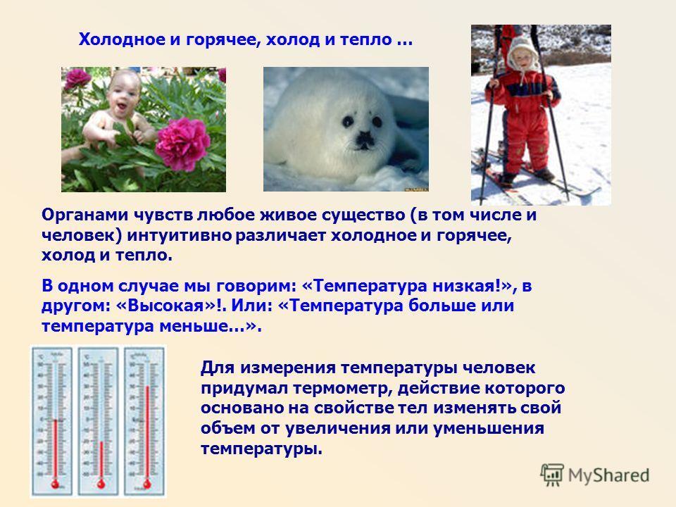 Холодное и горячее, холод и тепло … Органами чувств любое живое существо (в том числе и человек) интуитивно различает холодное и горячее, холод и тепло. В одном случае мы говорим: «Температура низкая!», в другом: «Высокая»!. Или: «Температура больше