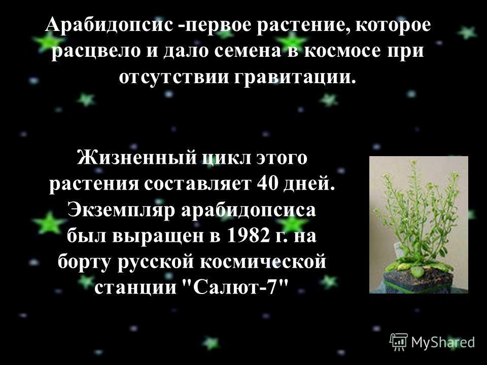 Арабидопсис -первое растение, которое расцвело и дало семена в космосе при отсутствии гравитации. Жизненный цикл этого растения составляет 40 дней. Экземпляр арабидопсиса был выращен в 1982 г. на борту русской космической станции Салют-7