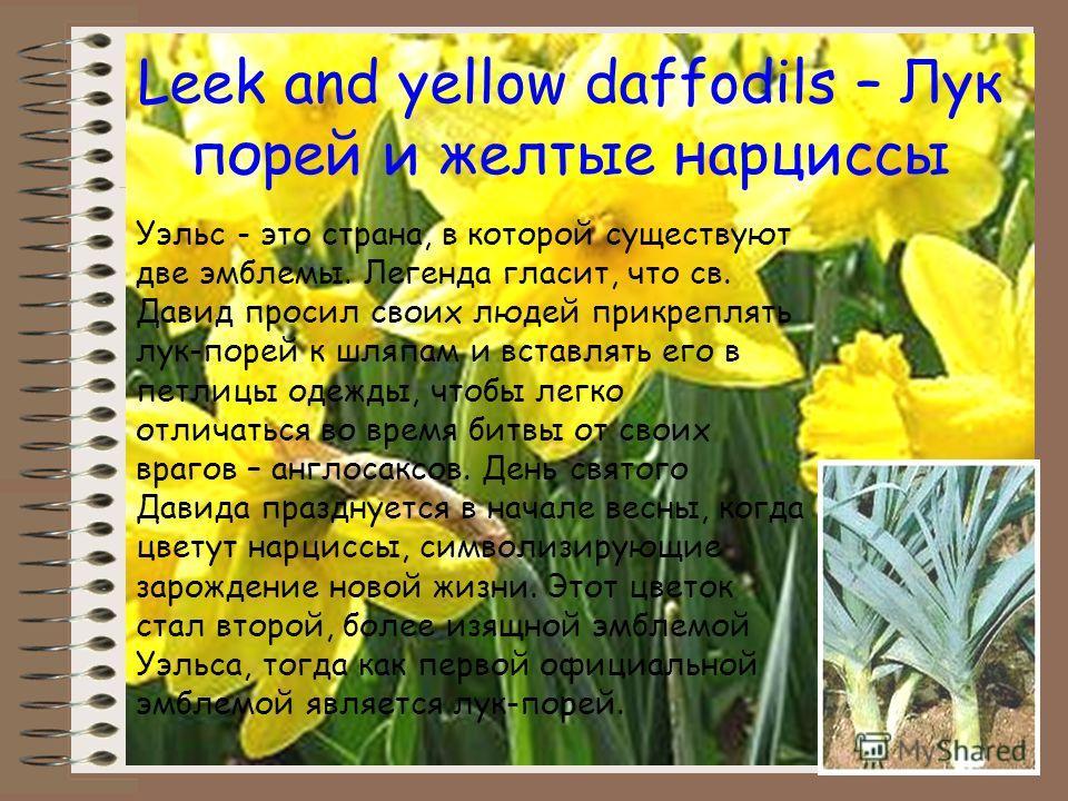 Leek and yellow daffodils – Лук порей и желтые нарциссы Уэльс - это страна, в которой существуют две эмблемы. Легенда гласит, что св. Давид просил своих людей прикреплять лук-порей к шляпам и вставлять его в петлицы одежды, чтобы легко отличаться во