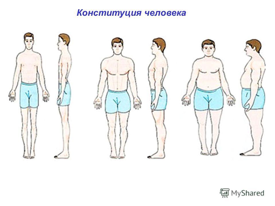 Конституция человека типы телосложения человека: долихоморфный ( от греч. dolichos длинный), для которого характерны узкое и длинное туловище, длинные конечности (астеник); брахиморфный (от греч. brdchys широкий), имеющий короткое широкое туловище, к