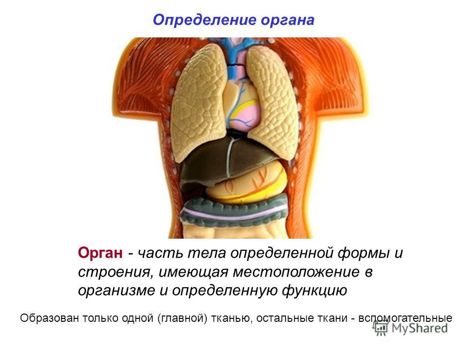 Определение органа Орган - часть тела определенной формы и строения, имеющая местоположение в организме и определенную функцию Образован только одной (главной) тканью, остальные ткани - вспомогательные