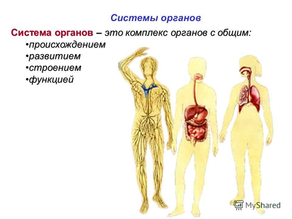 Система органов – это комплекс органов с общим: происхождениемпроисхождением развитиемразвитием строениемстроением функциейфункцией Системы органов