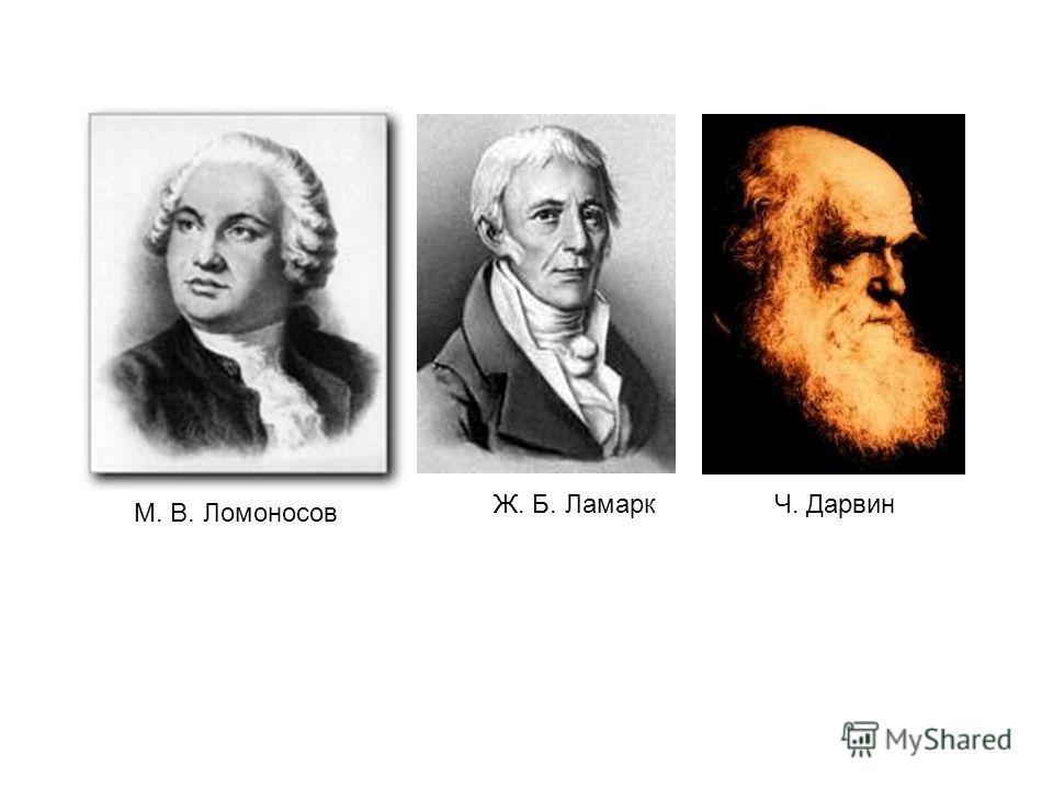 М. В. Ломоносов Ж. Б. ЛамаркЧ. Дарвин
