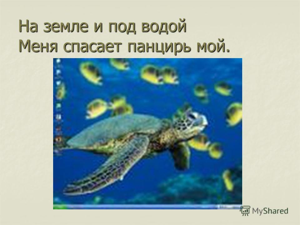 На земле и под водой Меня спасает панцирь мой.