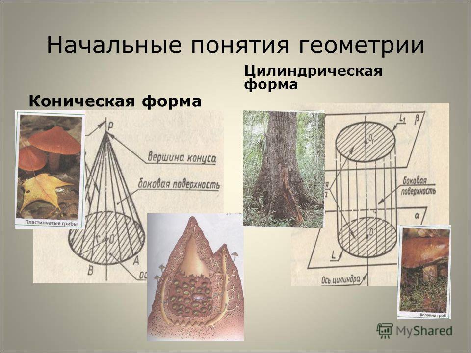 Начальные понятия геометрии Коническая форма Цилиндрическая форма