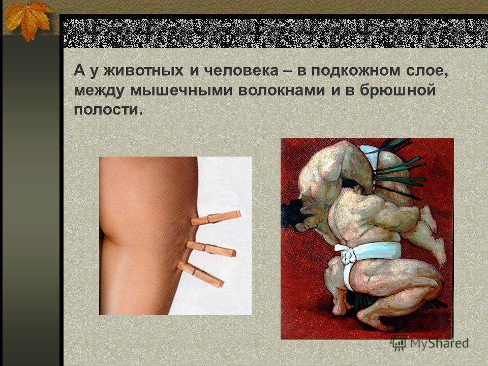 А у животных и человека – в подкожном слое, между мышечными волокнами и в брюшной полости.
