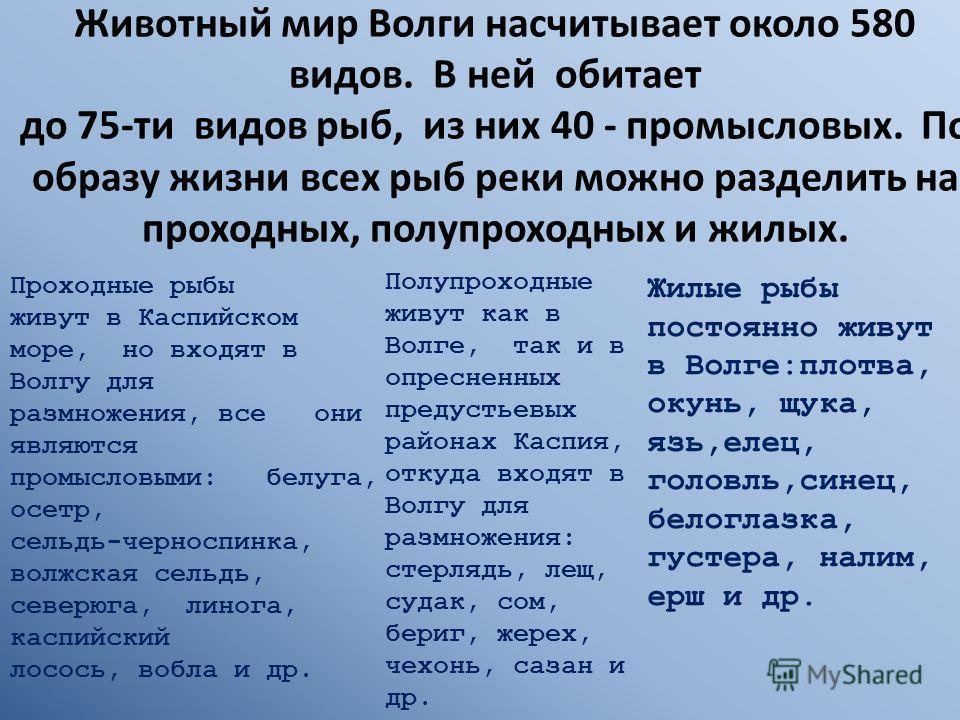 Животный мир Волги насчитывает около 580 видов. В ней обитает до 75-ти видов рыб, из них 40 - промысловых. По образу жизни всех рыб реки можно разделить на проходных, полупроходных и жилых. Проходные рыбы живут в Каспийском море, но входят в Волгу дл