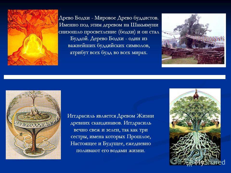 Древо Бодхи - Мировое Древо буддистов. Именно под этим деревом на Шакьямуни снизошло просветление (бодхи) и он стал Буддой. Дерево Бодхи - один из важнейших буддийских символов, атрибут всех будд во всех мирах. Иггдрасиль является Древом Жизни древни