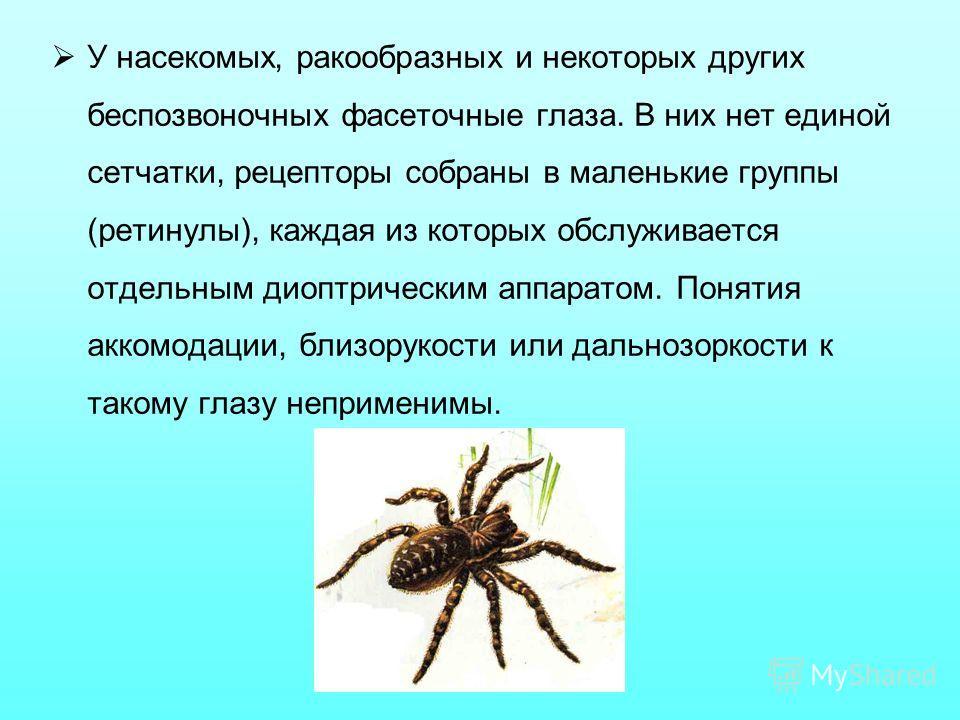 У насекомых, ракообразных и некоторых других беспозвоночных фасеточные глаза. В них нет единой сетчатки, рецепторы собраны в маленькие группы (ретинулы), каждая из которых обслуживается отдельным диоптрическим аппаратом. Понятия аккомодации, близорук