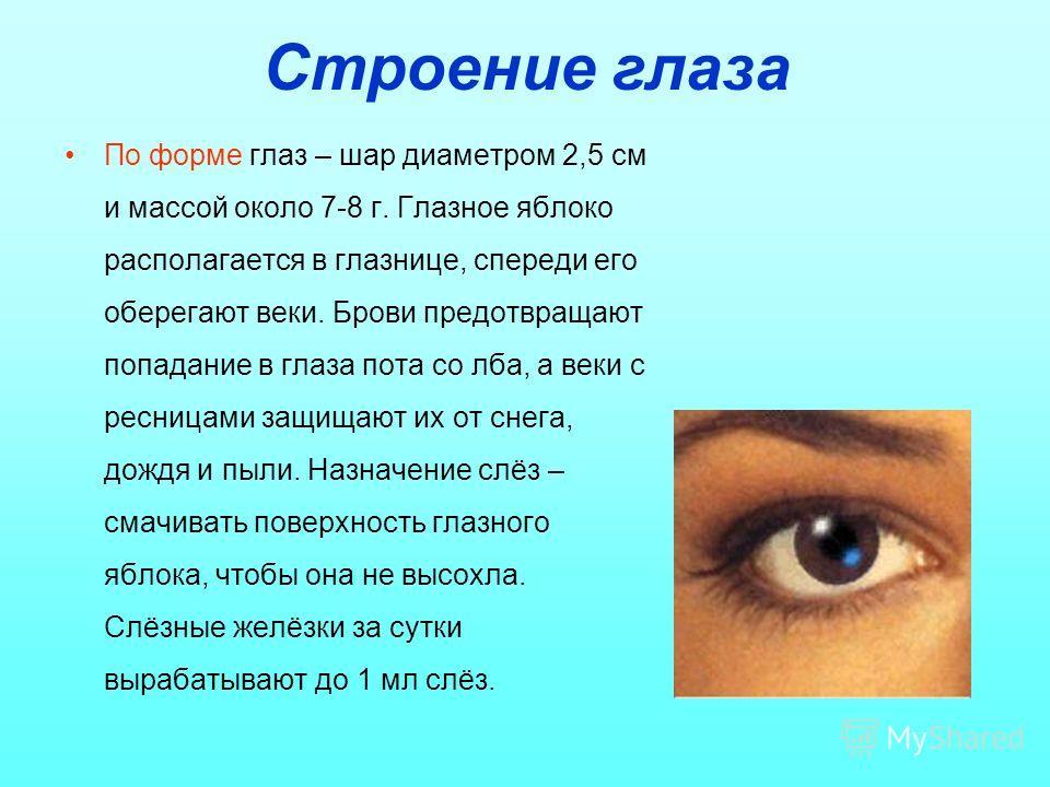 Строение глаза По форме глаз – шар диаметром 2,5 см и массой около 7-8 г. Глазное яблоко располагается в глазнице, спереди его оберегают веки. Брови предотвращают попадание в глаза пота со лба, а веки с ресницами защищают их от снега, дождя и пыли. Н