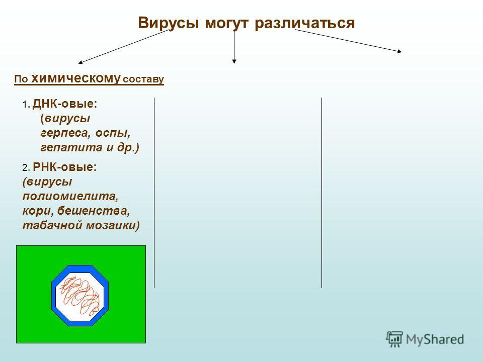 Вирусы могут различаться По химическому составу 1. ДНК-овые: (вирусы герпеса, оспы, гепатита и др.) 2. РНК-овые: (вирусы полиомиелита, кори, бешенства, табачной мозаики)