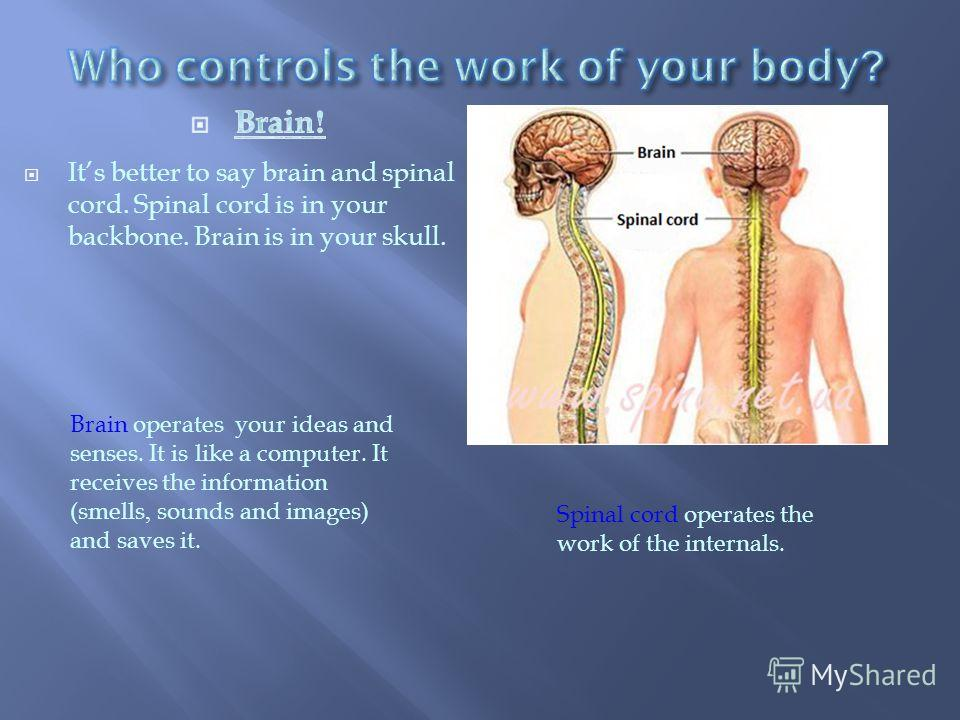 Brain operates your ideas and senses. It is like a computer. It receives the information (smells, sounds and images) and saves it. Spinal cord operates the work of the internals.