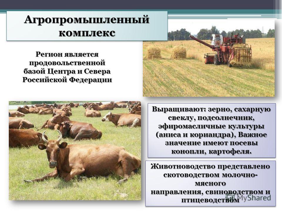 Агропромышленный комплекс Регион является продовольственной базой Центра и Севера Российской Федерации Животноводство представлено скотоводством молочно- мясного направления, свиноводством и птицеводством Выращивают: зерно, сахарную свеклу, подсолнеч