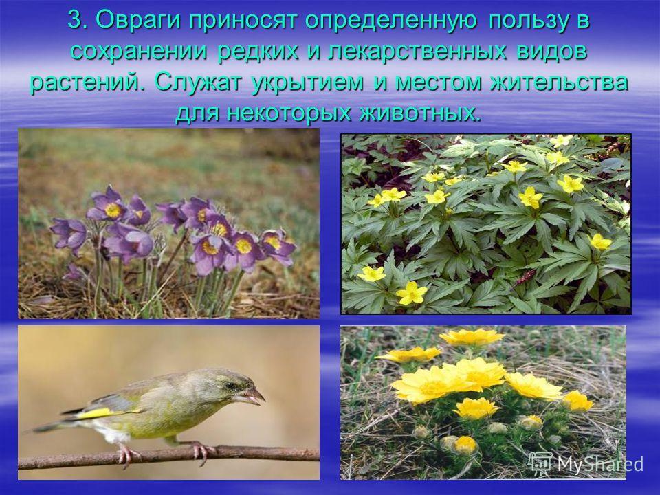 3. Овраги приносят определенную пользу в сохранении редких и лекарственных видов растений. Служат укрытием и местом жительства для некоторых животных.