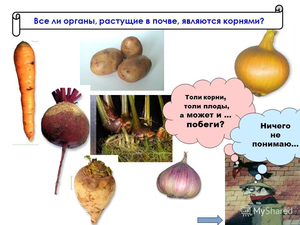 Толи корни, толи плоды, а может и … побеги? Ничего не понимаю…