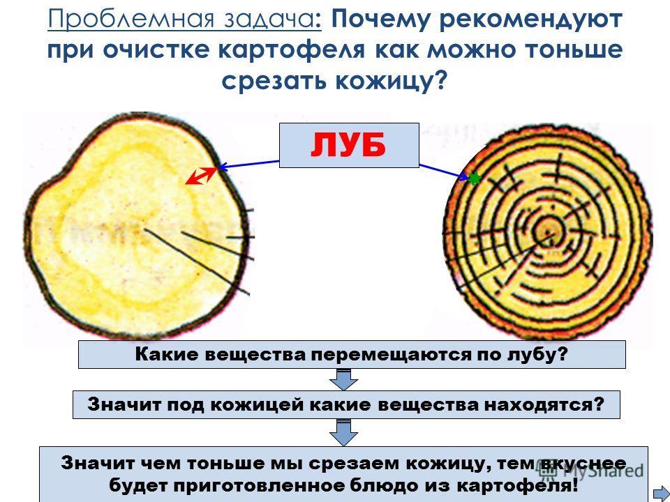 Проблемная задача : Почему рекомендуют при очистке картофеля как можно тоньше срезать кожицу? ЛУБ Какие вещества перемещаются по лубу? Значит под кожицей какие вещества находятся? Значит чем тоньше мы срезаем кожицу, тем вкуснее будет приготовленное