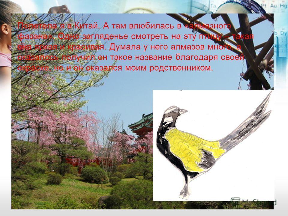 Полетела я в Китай. А там влюбилась в «алмазного фазана». Одно загляденье смотреть на эту птицу – такая она яркая и красивая. Думала у него алмазов много, а оказалось получил он такое название благодаря своей окраске, но и он оказался моим родственни