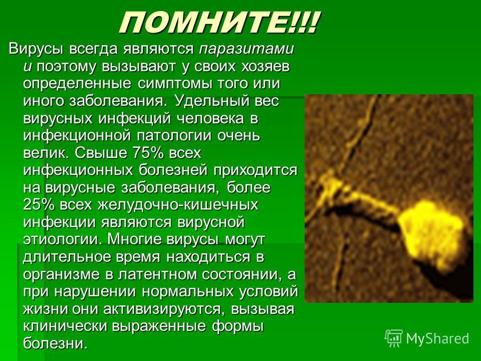ПОМНИТЕ!!! ПОМНИТЕ!!! Вирусы всегда являются паразитами и поэтому вызывают у своих хозяев определенные симптомы того или иного заболевания. Удельный вес вирусных инфекций человека в инфекционной патологии очень велик. Свыше 75% всех инфекционных боле
