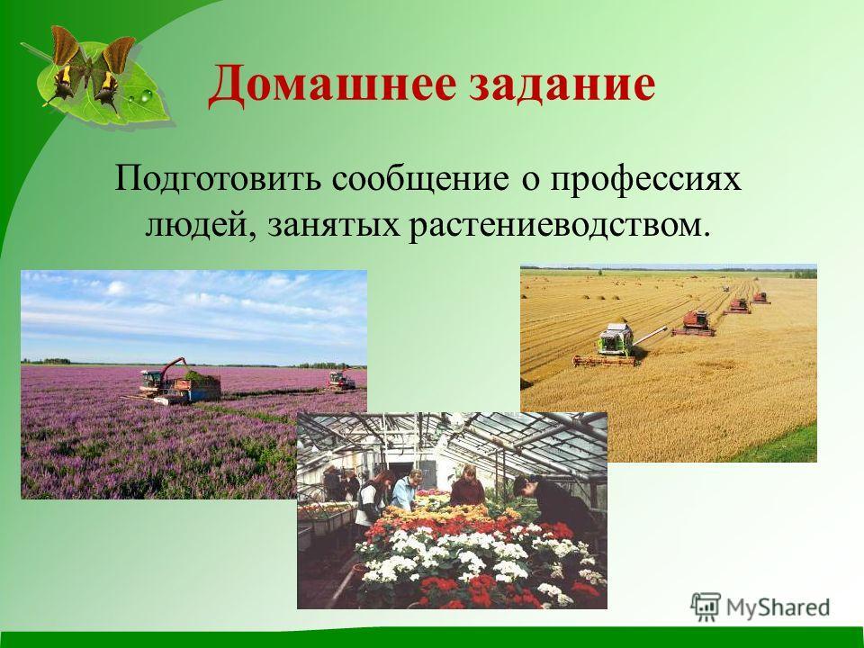 Домашнее задание Подготовить сообщение о профессиях людей, занятых растениеводством.
