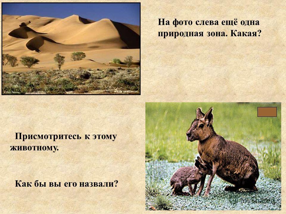 На фото слева ещё одна природная зона. Какая? Присмотритесь к этому животному. Как бы вы его назвали?