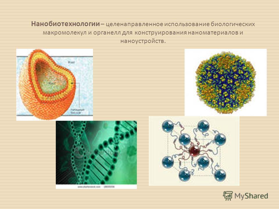 Нанобиотехнологии – целенаправленное использование биологических макромолекул и органелл для конструирования наноматериалов и наноустройств.