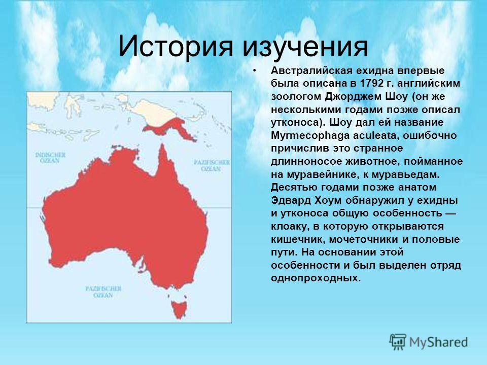 История изучения Австралийская ехидна впервые была описана в 1792 г. английским зоологом Джорджем Шоу (он же несколькими годами позже описал утконоса). Шоу дал ей название Myrmecophaga aculeata, ошибочно причислив это странное длинноносое животное, п