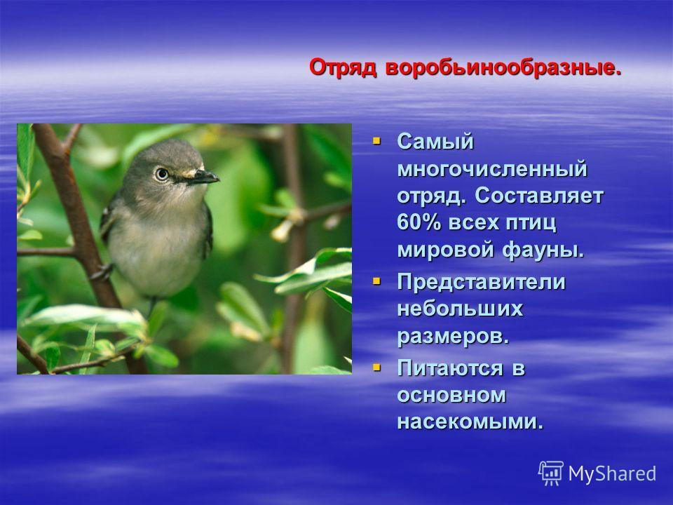 Отряд воробьинообразные. Отряд воробьинообразные. Самый многочисленный отряд. Составляет 60% всех птиц мировой фауны. Самый многочисленный отряд. Составляет 60% всех птиц мировой фауны. Представители небольших размеров. Представители небольших размер