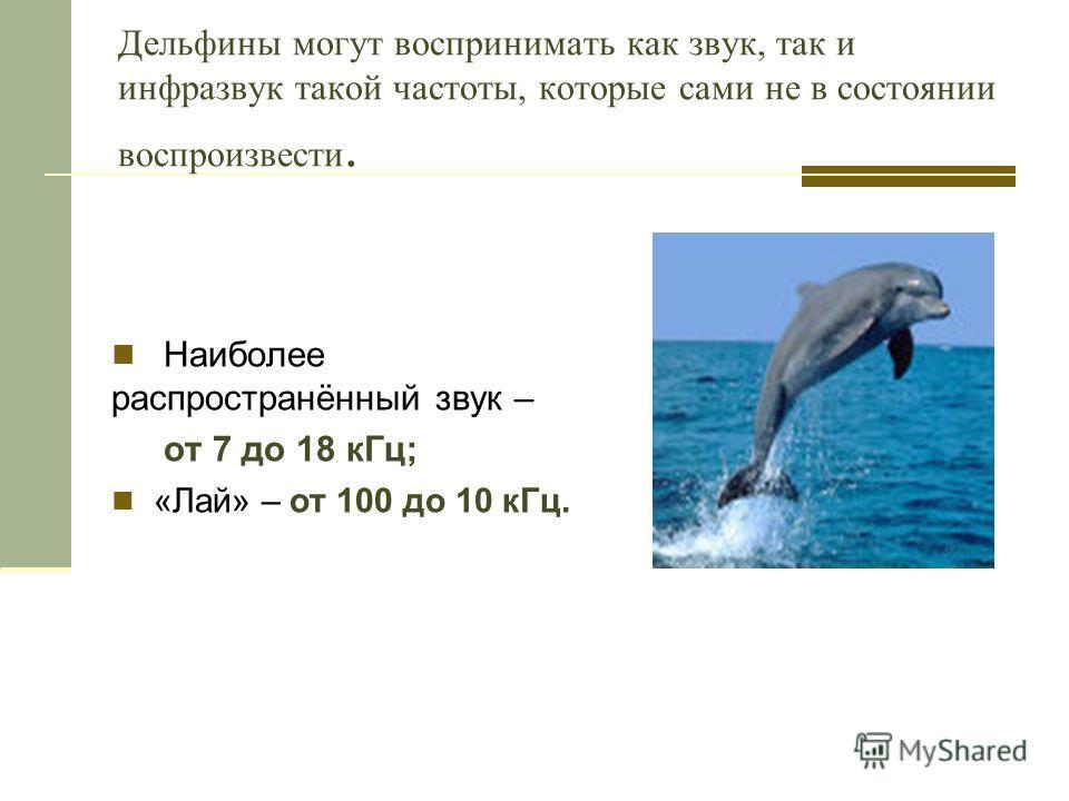 Дельфины могут воспринимать как звук, так и инфразвук такой частоты, которые сами не в состоянии воспроизвести. Наиболее распространённый звук – от 7 до 18 кГц; «Лай» – от 100 до 10 кГц.