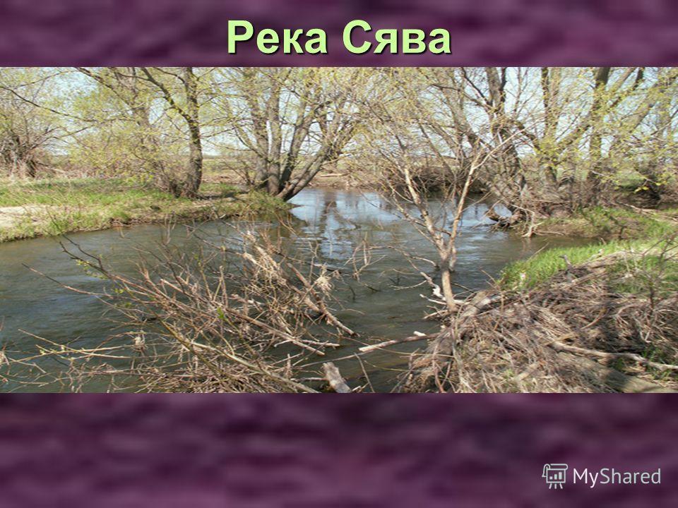 Река Сява Река Сява