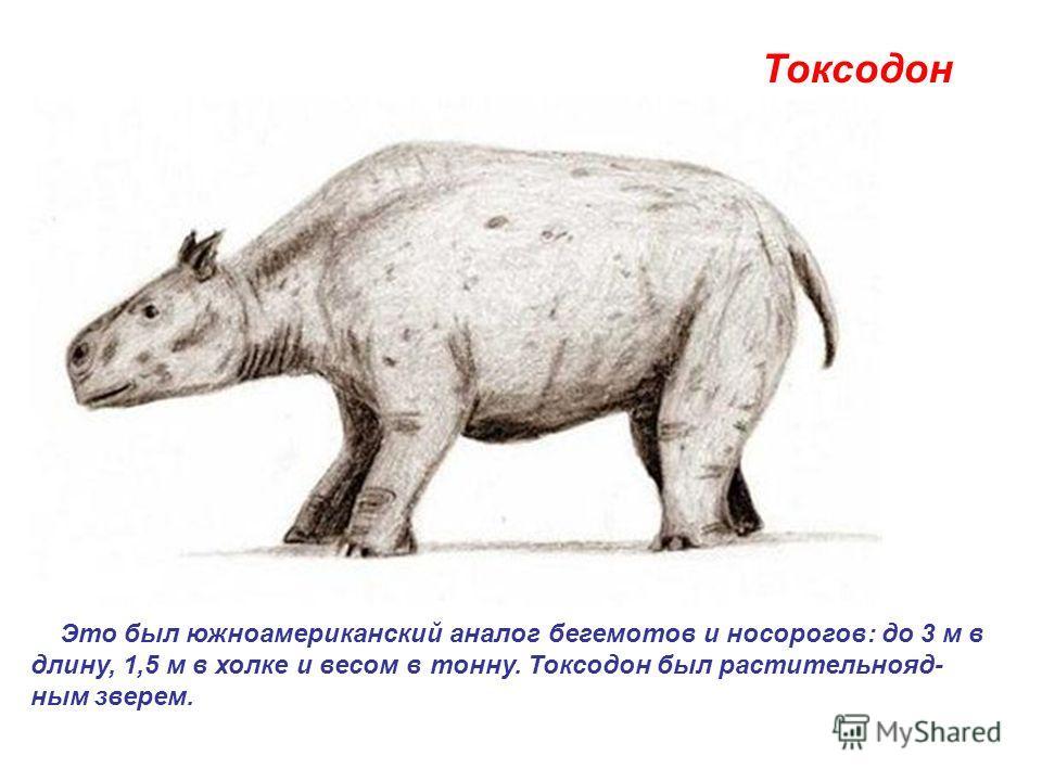 Токсодон Это был южноамериканский аналог бегемотов и носорогов: до 3 м в длину, 1,5 м в холке и весом в тонну. Токсодон был растительнояд- ным зверем.