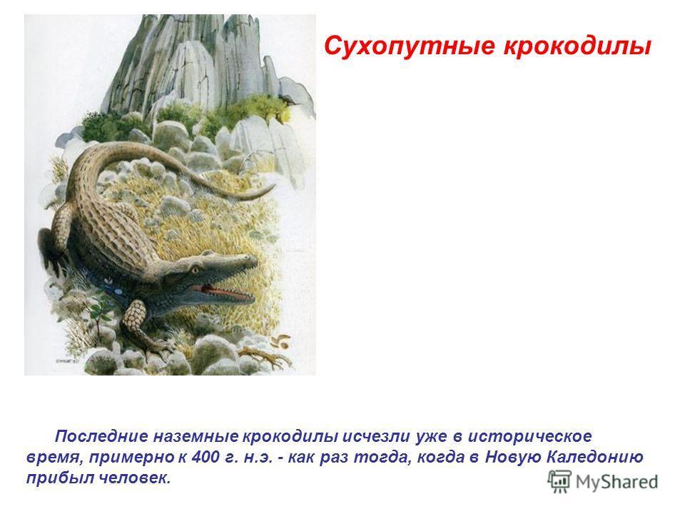 Сухопутные крокодилы Последние наземные крокодилы исчезли уже в историческое время, примерно к 400 г. н.э. - как раз тогда, когда в Новую Каледонию прибыл человек.