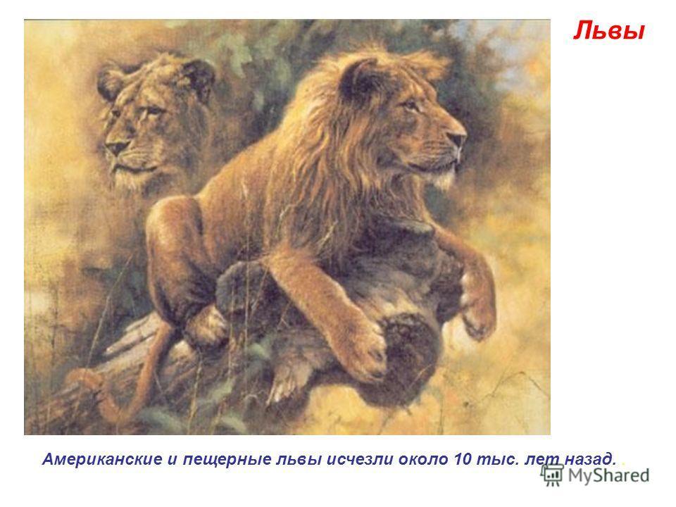 Львы Американские и пещерные львы исчезли около 10 тыс. лет назад..
