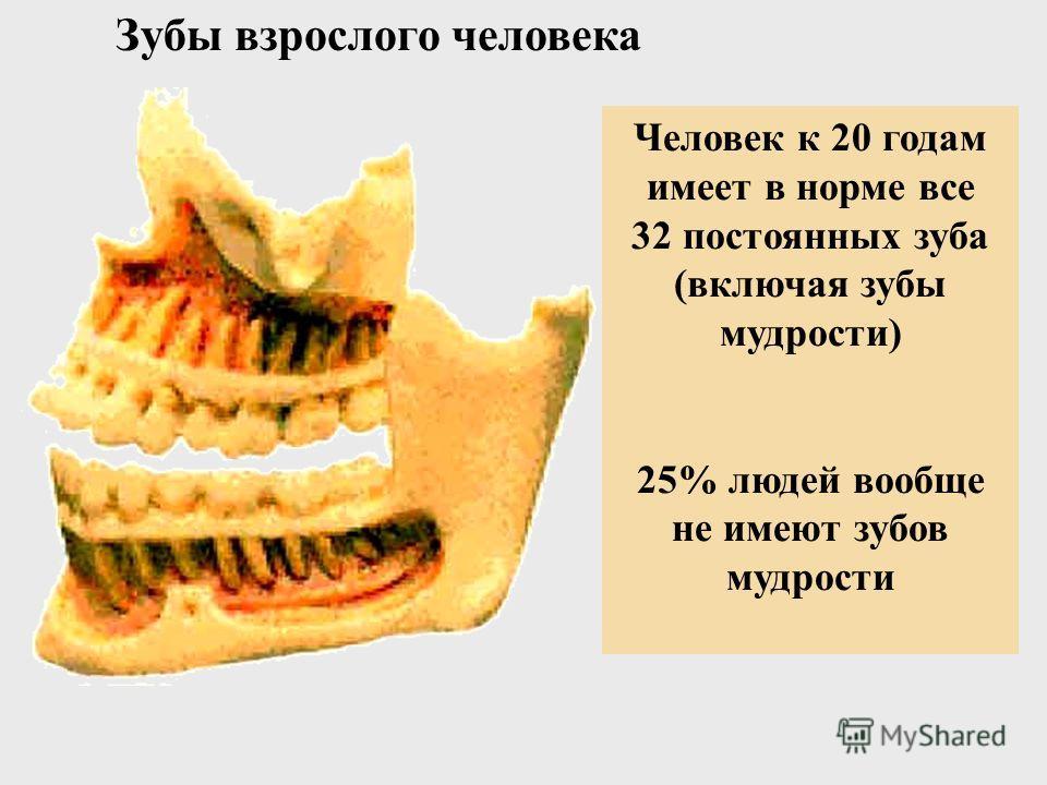 Зубы 5-летнего ребенка Полный набор из 20 молочных зубов Видны формирующиеся постоянные зубы в обеих челюстях