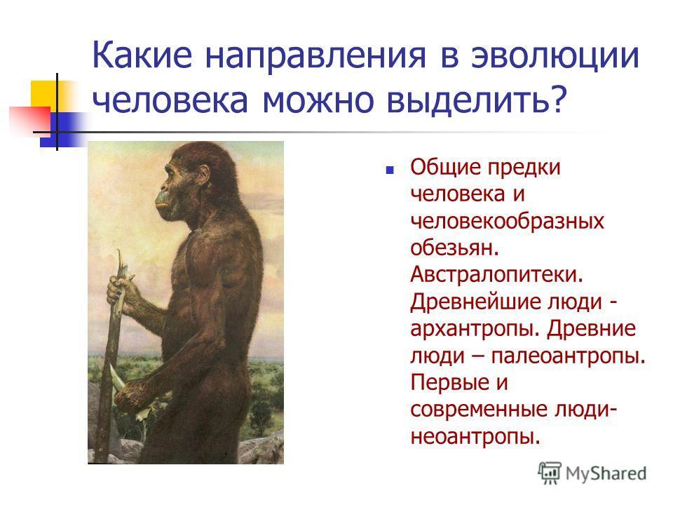 Какие направления в эволюции человека можно выделить? Общие предки человека и человекообразных обезьян. Австралопитеки. Древнейшие люди - архантропы. Древние люди – палеоантропы. Первые и современные люди- неоантропы.