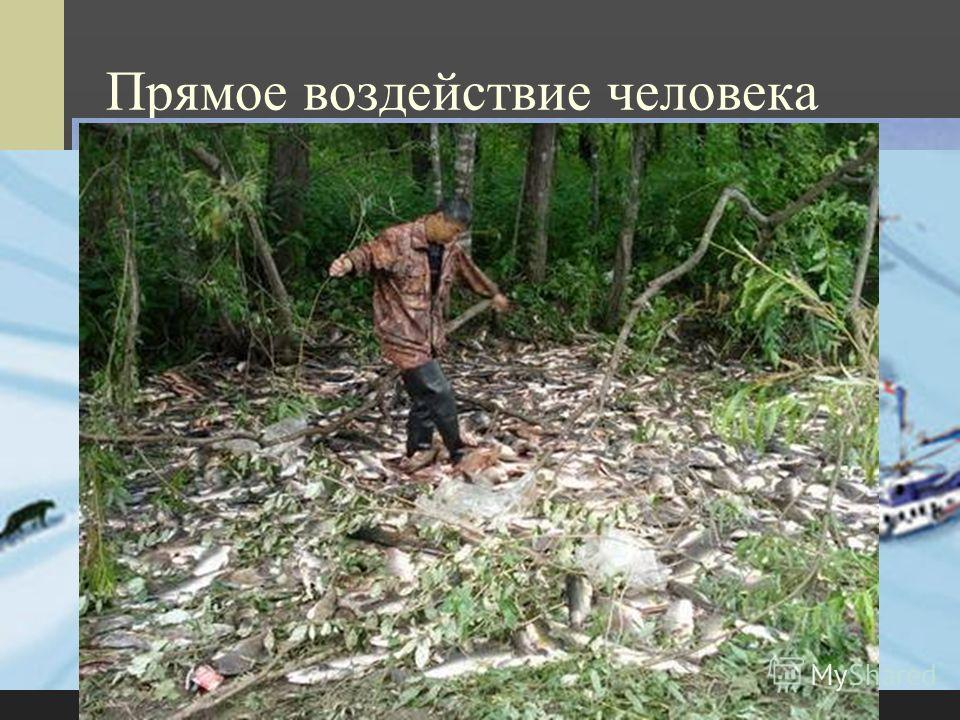 Прямое воздействие человека Браконьерство в Крымском заповеднике На Алтае На Ангаре