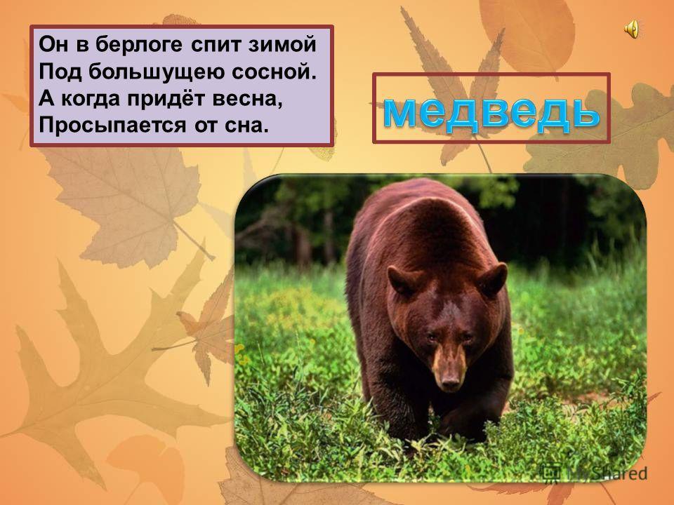 У человека одно, У ворона два, У медведя ни одного. Чем оканчиваются день и ночь?