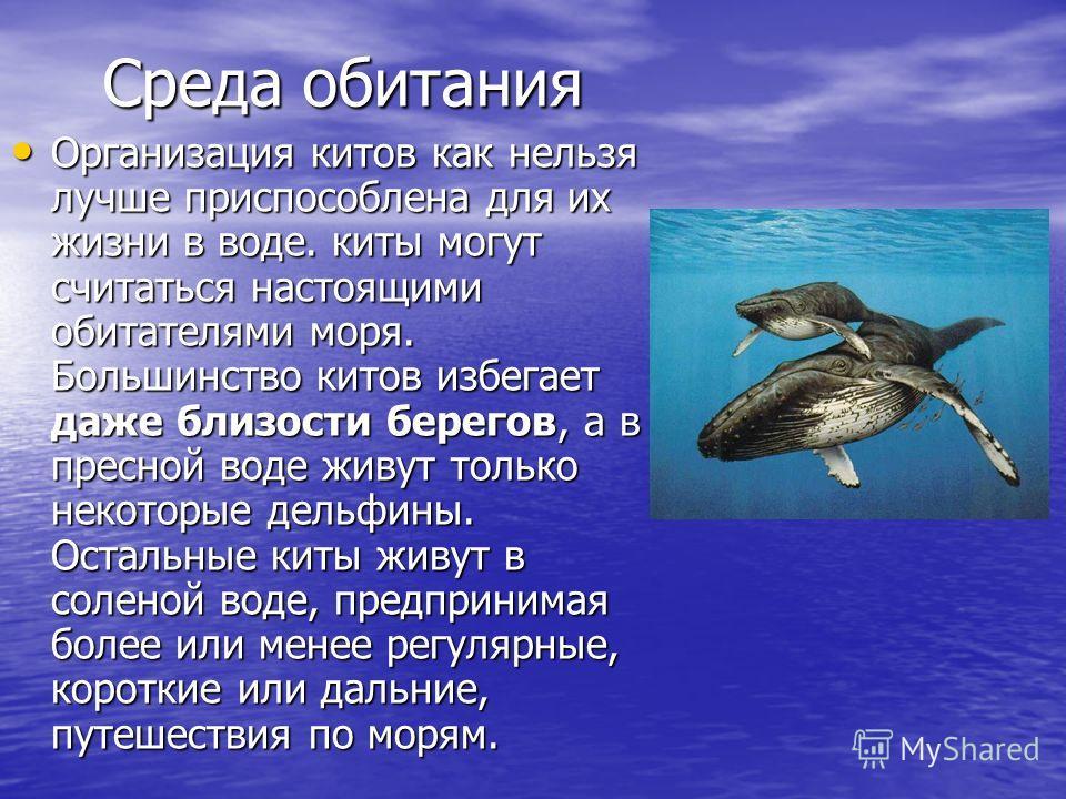 Среда обитания Организация китов как нельзя лучше приспособлена для их жизни в воде. киты могут считаться настоящими обитателями моря. Большинство китов избегает даже близости берегов, а в пресной воде живут только некоторые дельфины. Остальные киты