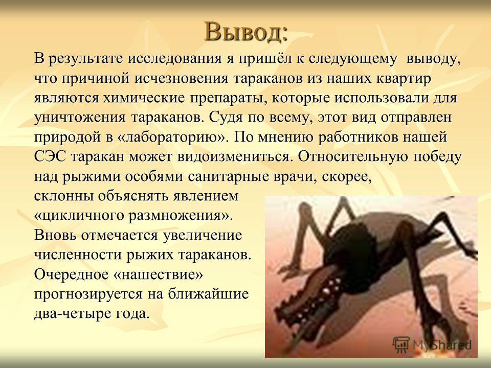 Вывод: В результате исследования я пришёл к следующему выводу, что причиной исчезновения тараканов из наших квартир являются химические препараты, которые использовали для уничтожения тараканов. Судя по всему, этот вид отправлен природой в «лаборатор