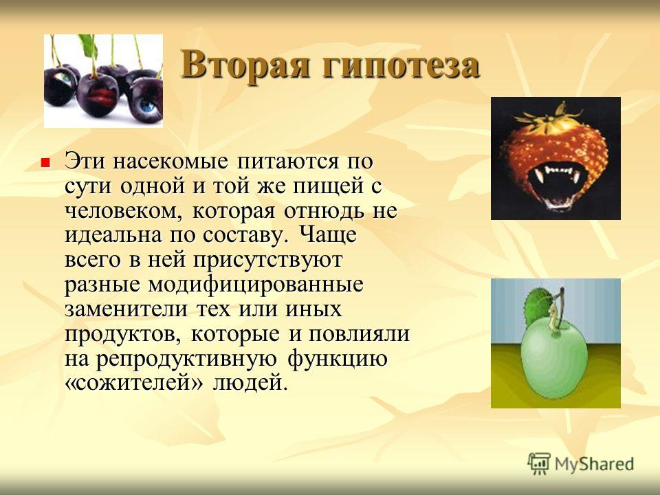 Вторая гипотеза Эти насекомые питаются по сути одной и той же пищей с человеком, которая отнюдь не идеальна по составу. Чаще всего в ней присутствуют разные модифицированные заменители тех или иных продуктов, которые и повлияли на репродуктивную функ